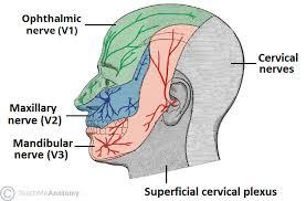 Trigeminal nerve headache migraine